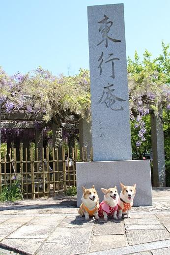 東行庵 2015-4-29-2