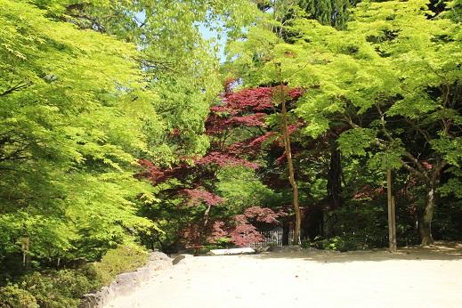 東行庵 2015-4-29-7