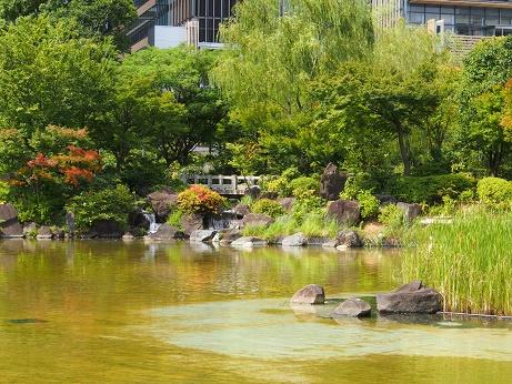 P8150094ひのき庭園