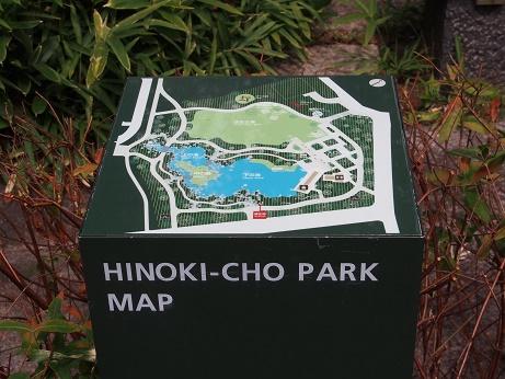 P8150121ヒノキ公園