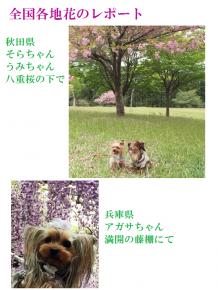 大樹5月号2