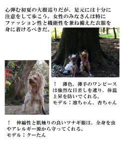 大樹5月号3