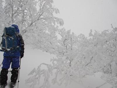 藻琴山樹氷1