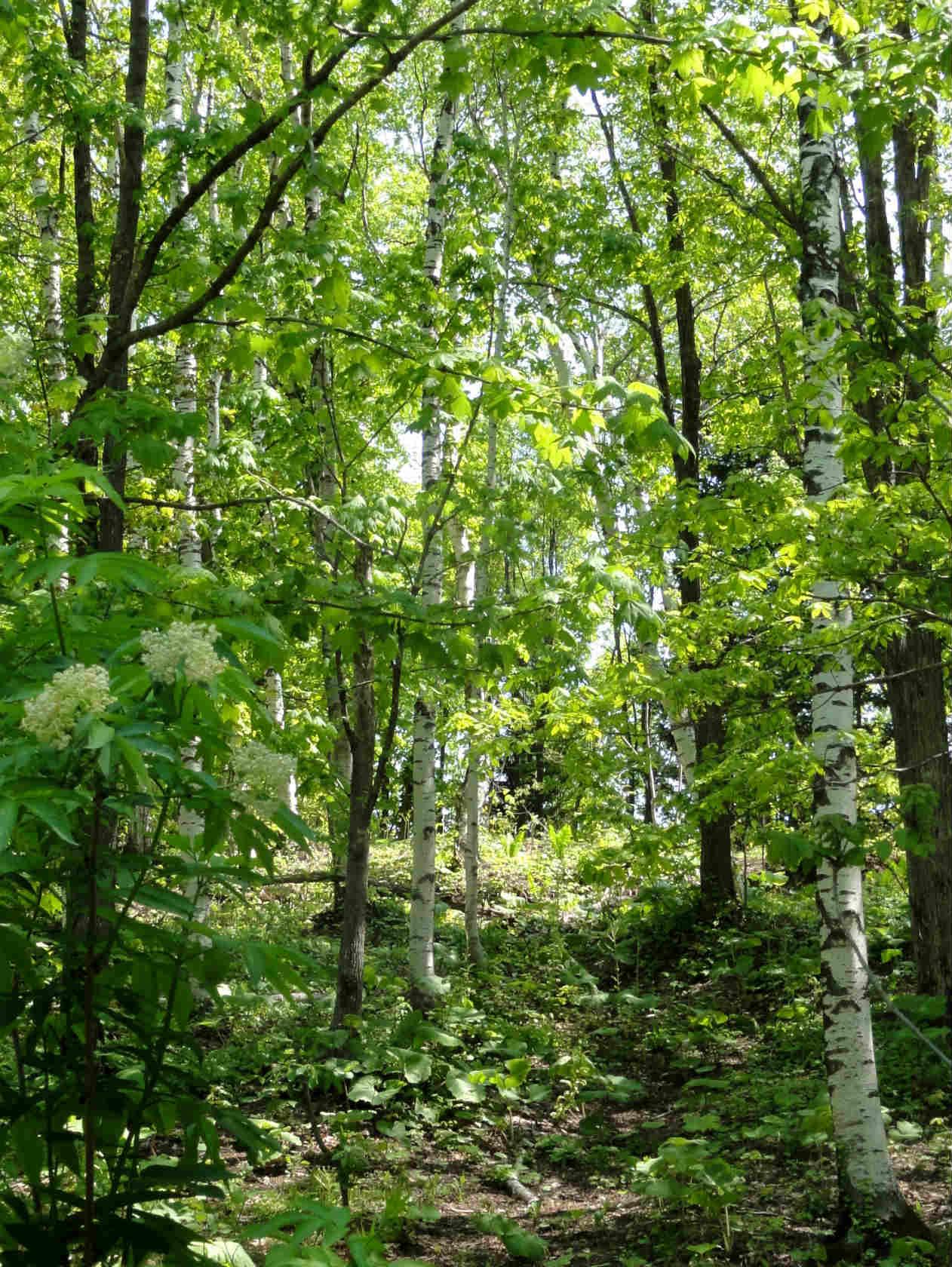 3滝野の森ゾーン散策路