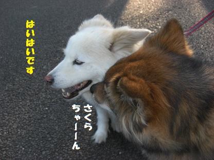 CIMG6462.jpg