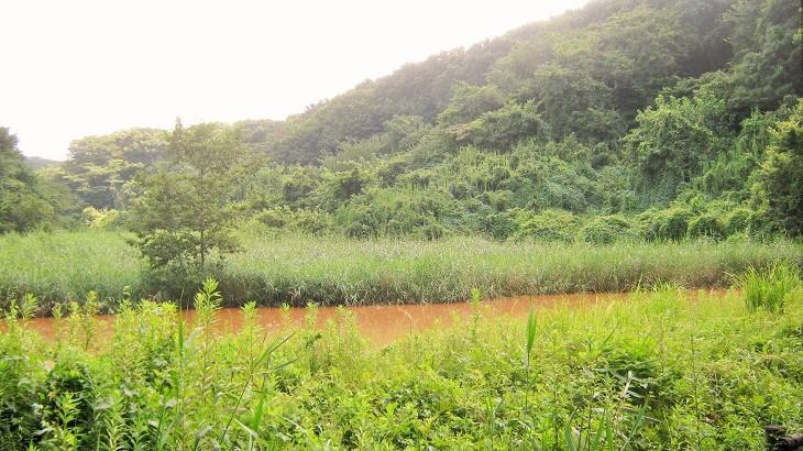midorinomori150809-106.jpg