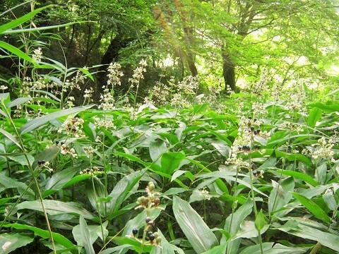 midorinomori150809-108.jpg