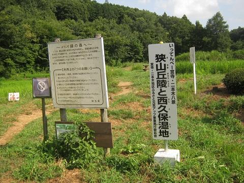 midorinomori150809-114.jpg