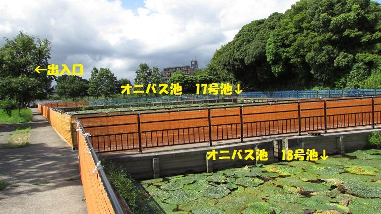 mizumoto150823-105.jpg