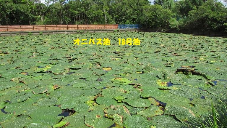 mizumoto150823-108.jpg