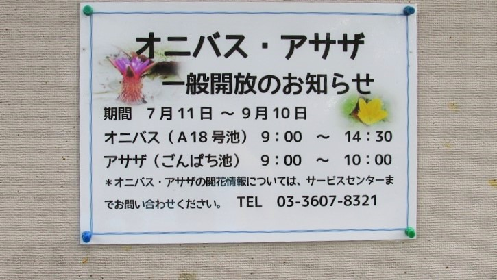 mizumoto150823-110.jpg