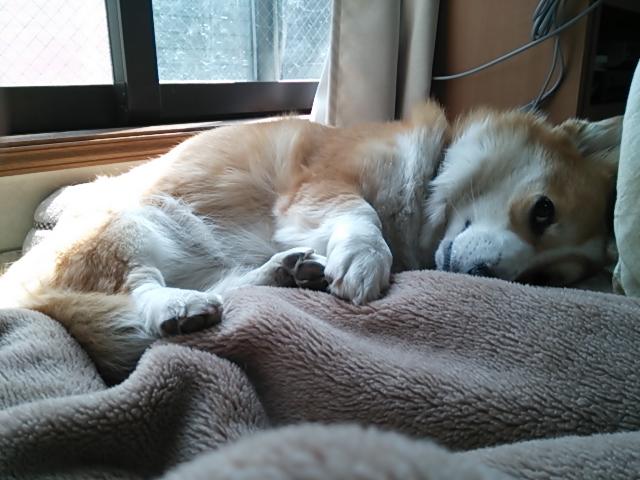 2歳ふう寝転び