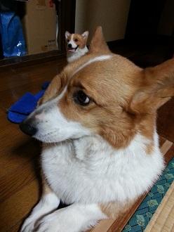 耳とちび耳3