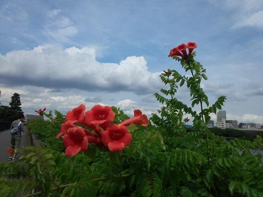 夏の雲 2