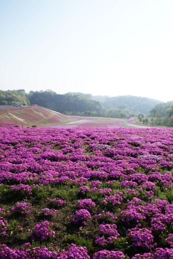 shibasakura2015_03.jpg