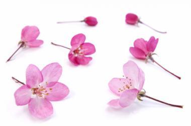 Sakura_convert_20150407033537.jpg