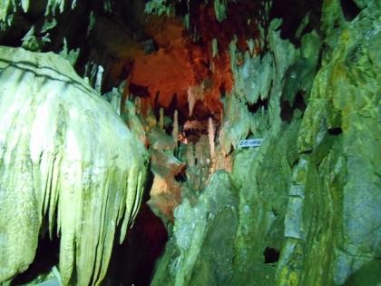 150601_12あぶくま洞石化の樹林