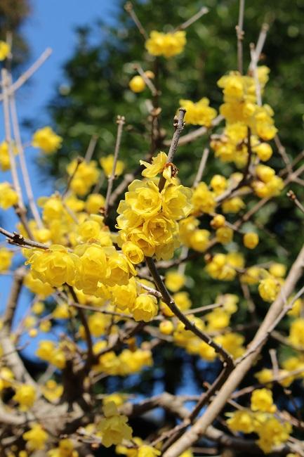 浄妙寺冬1