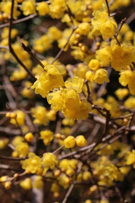 浄妙寺冬2