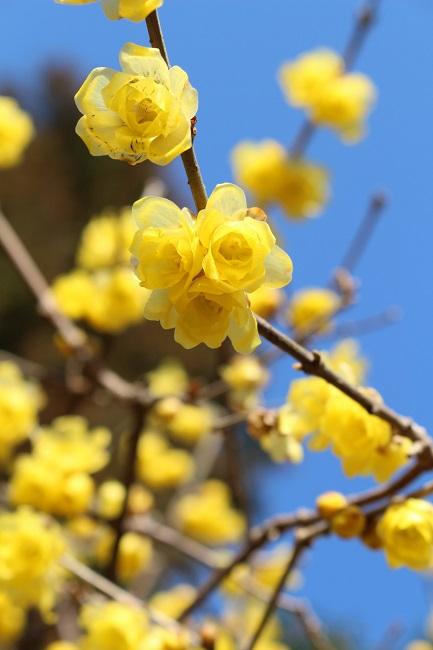 浄妙寺冬4
