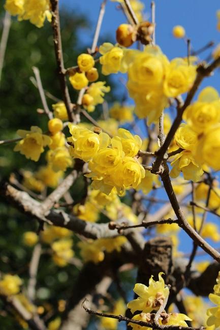 浄妙寺冬5