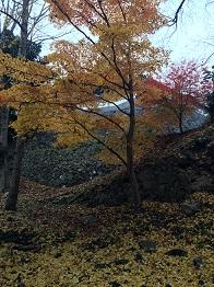 banshukiyomizudera20141110.jpg