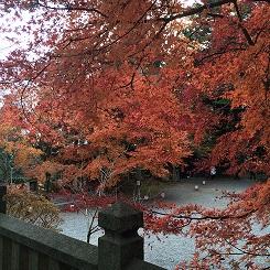 banshukiyomizudera20141114.jpg