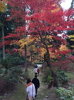 banshukiyomizudera20141116.jpg