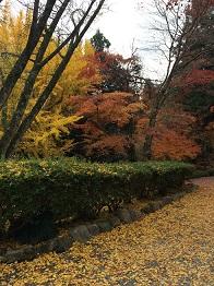 banshukiyomizudera2014119.jpg