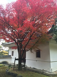 tatsuno201411.jpg