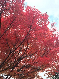 tatsuno201412.jpg