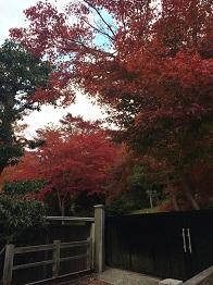 tatsuno201413.jpg