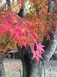 tatsuno201414.jpg