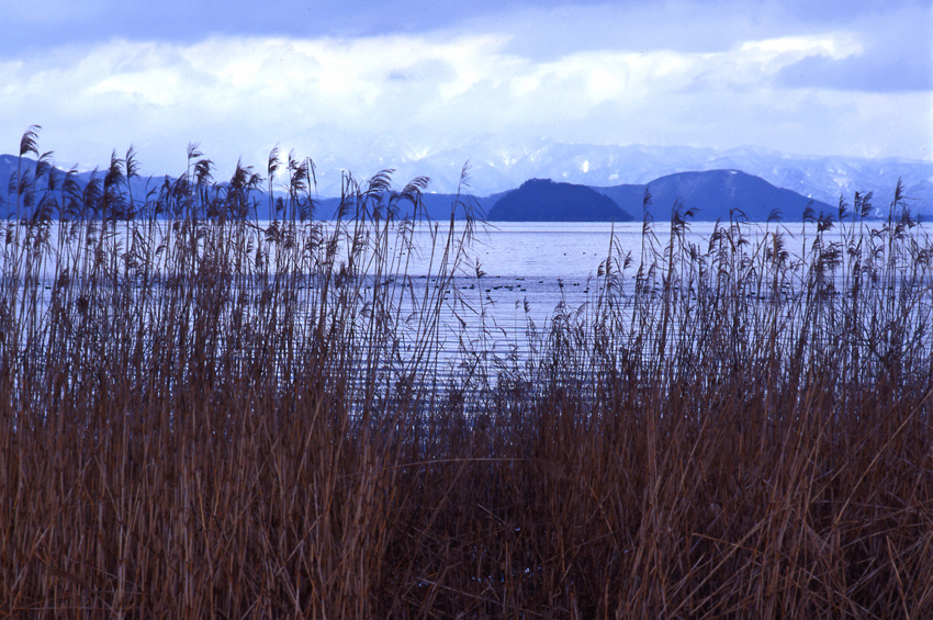 645湖北(冬)01