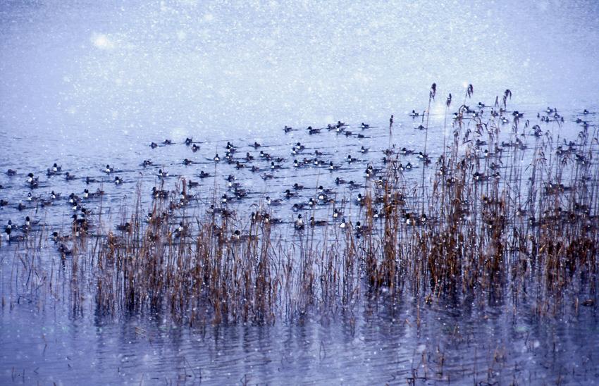 野鳥(冬)01