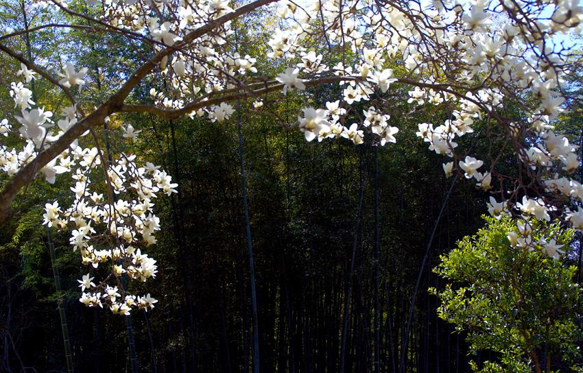 地蔵院blog05