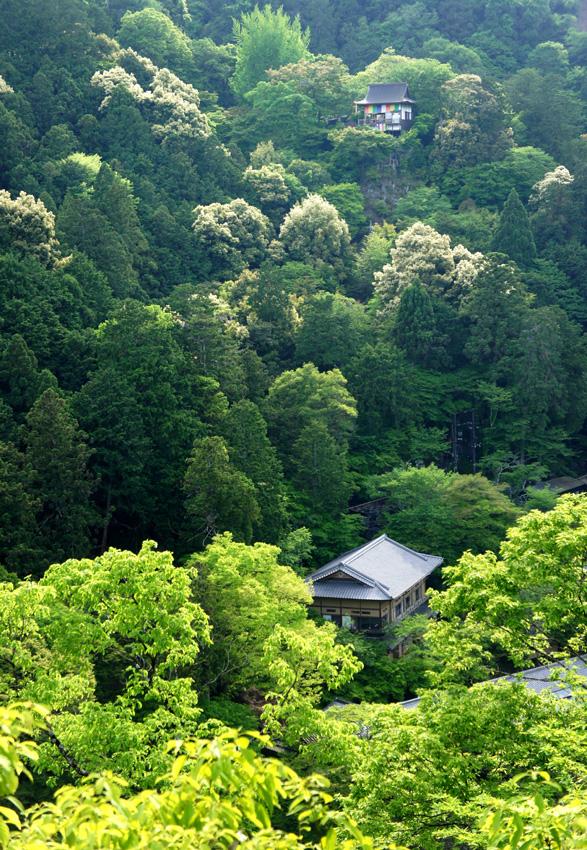 新緑嵐山04