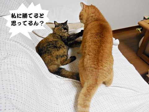 15_01_16_3.jpg