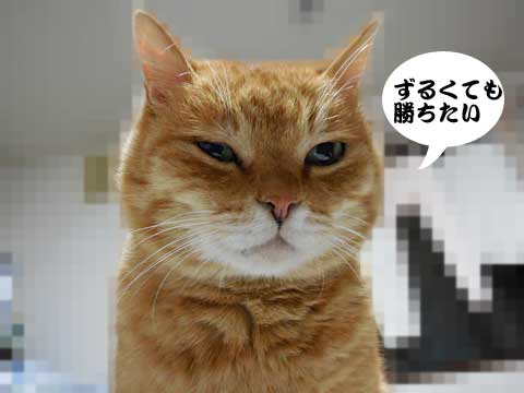 15_01_24_3.jpg