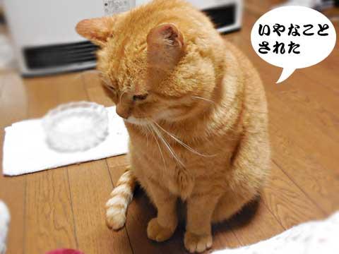 15_01_30_4.jpg