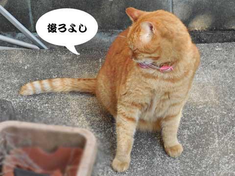 15_02_20_3.jpg