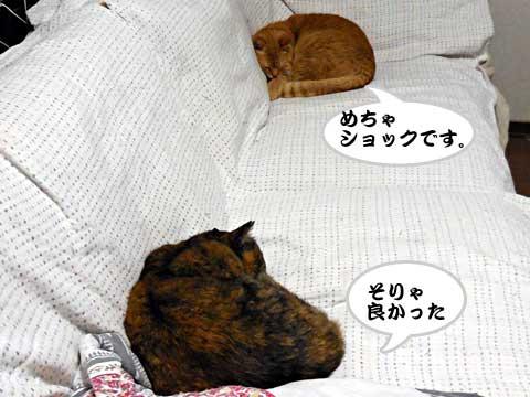 15_02_22_6.jpg