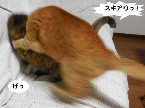 15_03_06_1.jpg