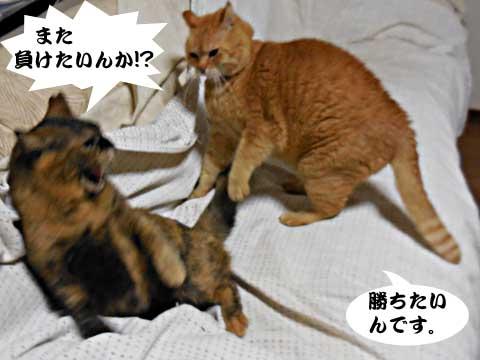 15_03_06_3.jpg