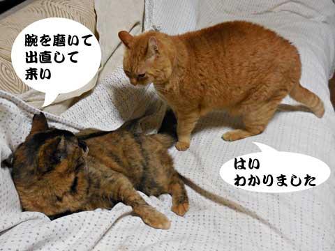 15_03_06_4.jpg