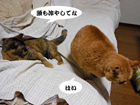 15_03_06_5.jpg