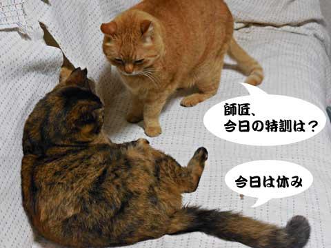 15_03_08_1.jpg