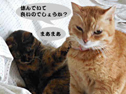 15_03_08_2.jpg