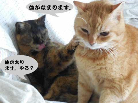 15_03_08_3.jpg