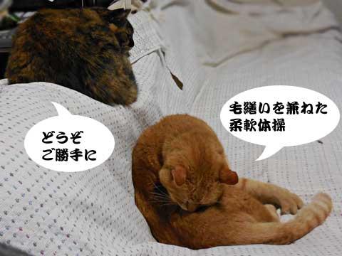 15_03_08_5.jpg